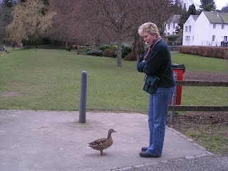 A duck discussion